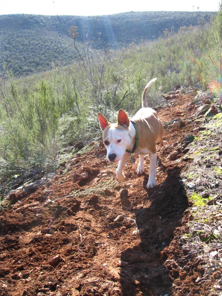 Trail Work - Do you?-trail-dog.jpg