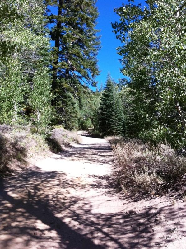 Late season Tahoe riding-trail.jpg
