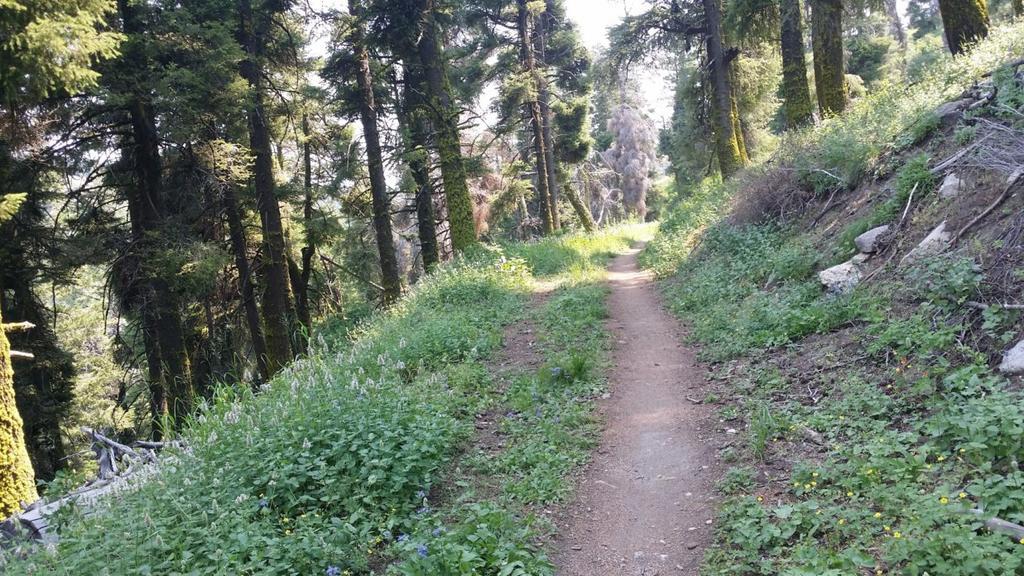"RSD Bikes ""The Mayor""-trail-through-trees.jpg"