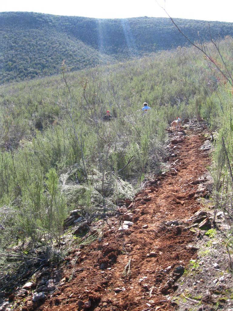 Trail Work - Do you?-trail-view.jpg