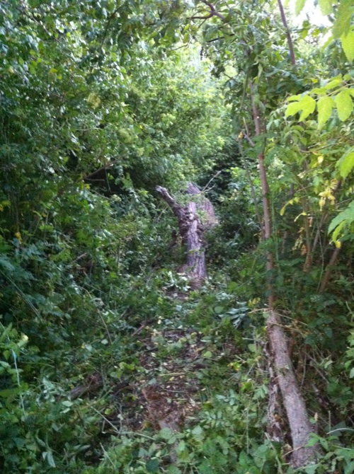My Backyard Trail & Dealing with Soft Soil-trail12.jpg