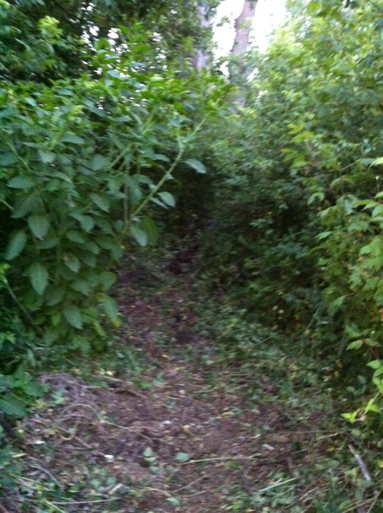 My Backyard Trail & Dealing with Soft Soil-trail2.jpg