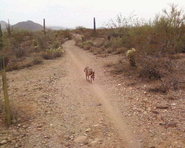 Are There Any Trails Around New River?-traildog.jpg