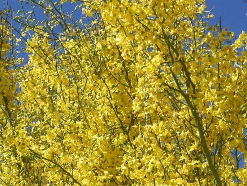AZ Photo Friday-April 8-tree-gold.jpg
