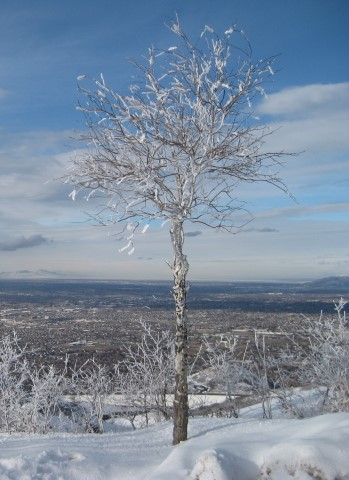 Name:  Tree of LIfe (Winter Version).jpg Views: 1136 Size:  51.1 KB