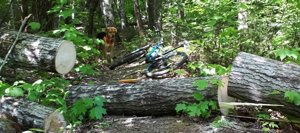 Worlds Smallest Chainsaw - Good Trail Maintenance tool?-tree_cut2.jpg