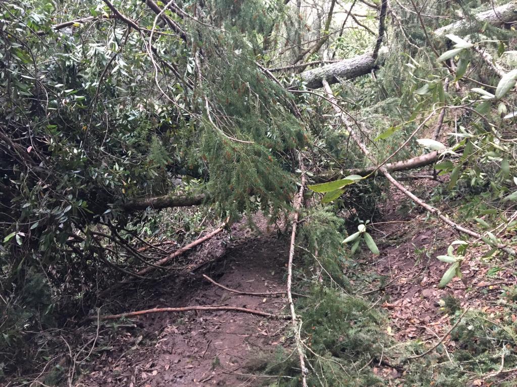 Annadel conditions update-tree_spring-creek.jpg