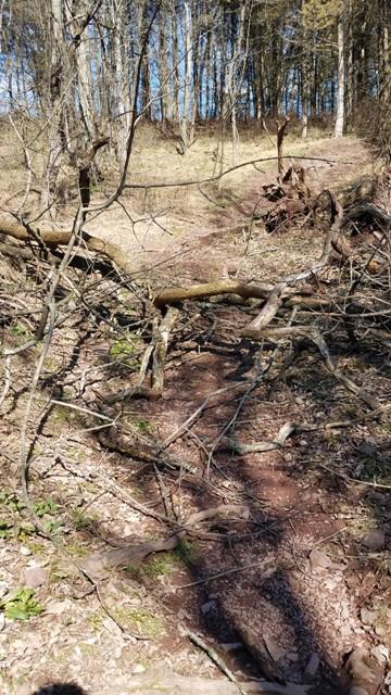 Green Lane trail conditions-treedown.jpg