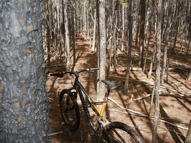 Laramiebikenet MTB Weekly Group Rides-trees.jpg