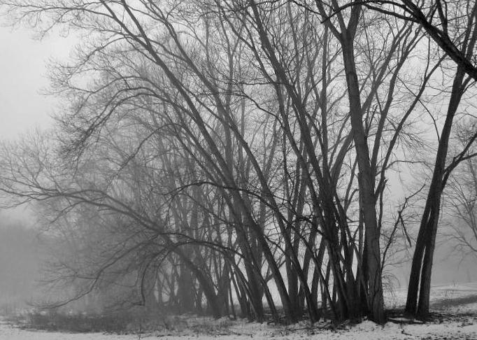 Black And White Photos Post 'Em-trees-mist-2-.jpg
