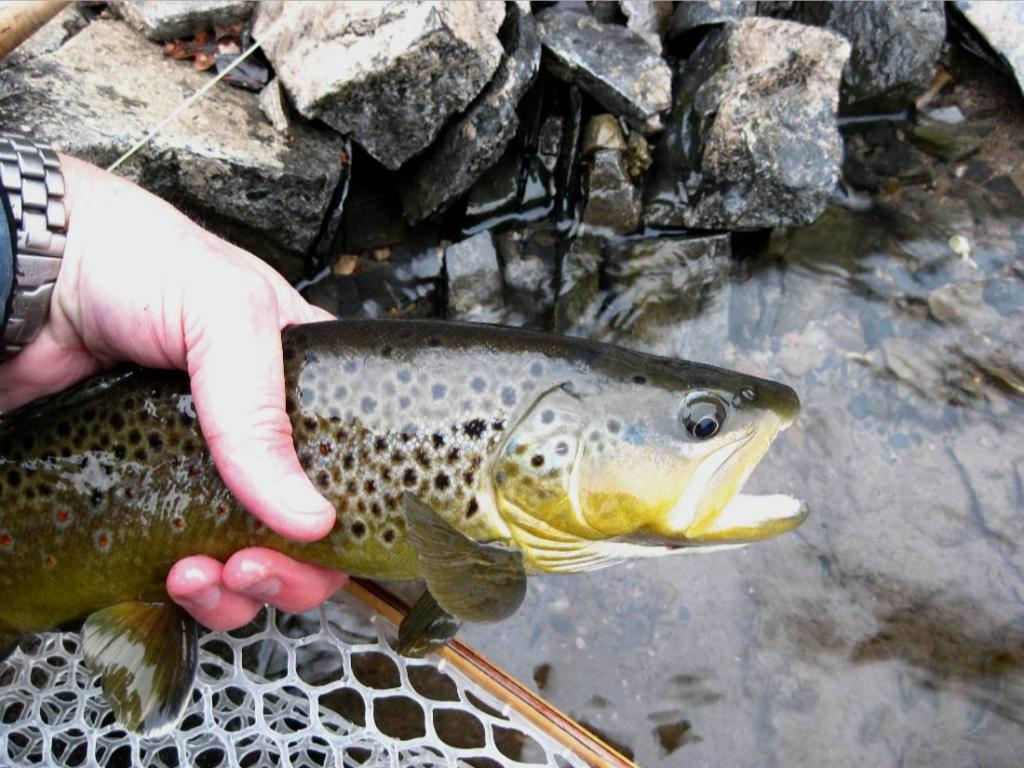 A Change in the Weather.-trout.jpg