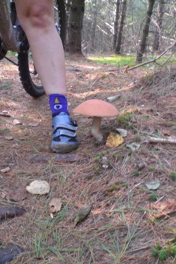 Mushrooms....Post your pics...-tucker-brook-003-copy.jpg