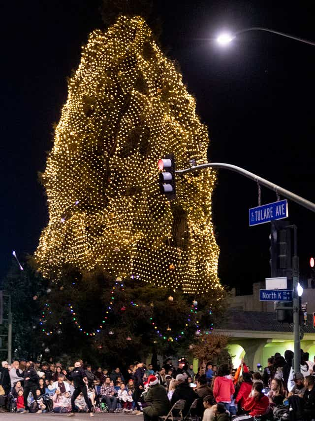 Have you gotten your Xmas tree, yet?-tulare-tree.jpg