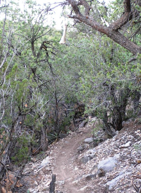 Tunnel/Otero Trail Work w/US Forest Svc-tunnel.jpg