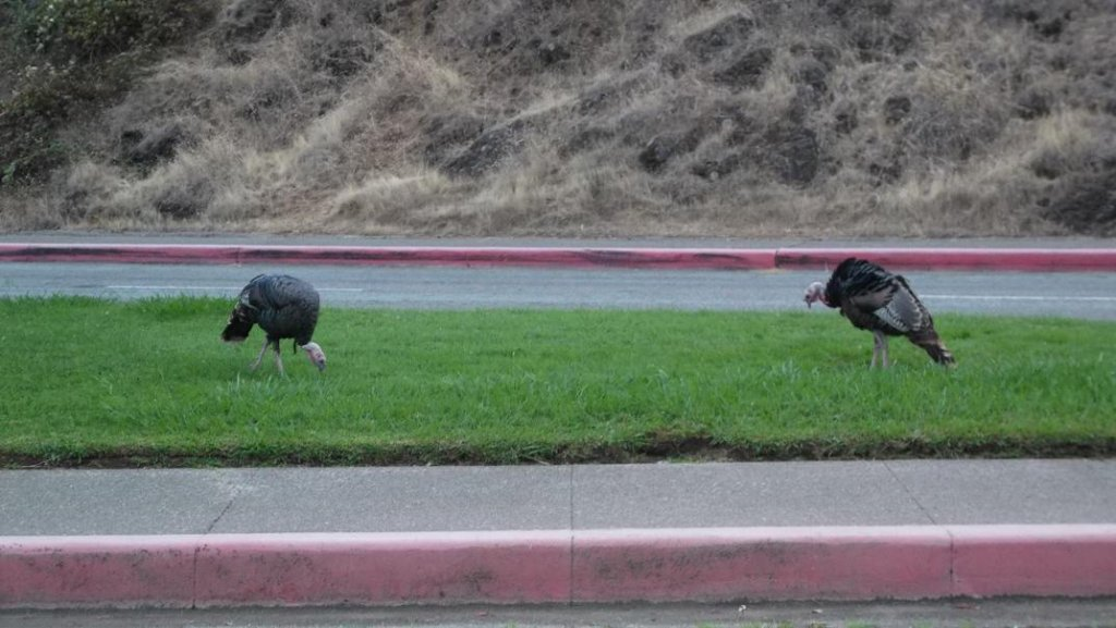 Wildlife you have seen on trail...post your pics...-turkeys01.jpg