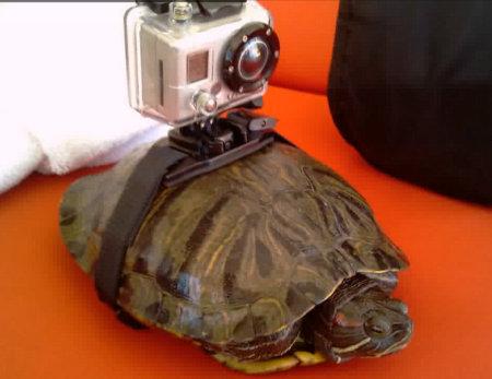 Name:  turtle-eye-view.jpg Views: 462 Size:  31.5 KB