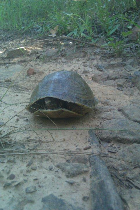 Miss Yawl Spud Buddies-turtle.jpg
