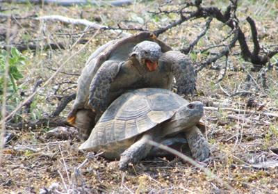Name:  turtle.jpg Views: 1515 Size:  161.6 KB
