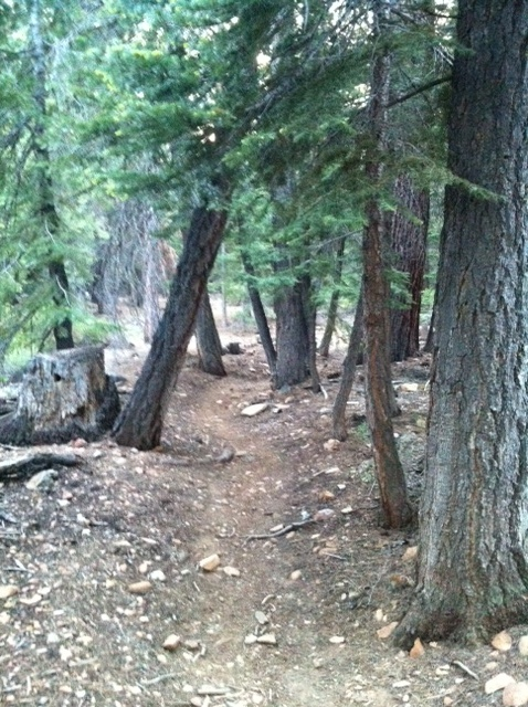 Want wider handlebars, need advice on stem length & backsweep-tvrp-tight-trees.jpg