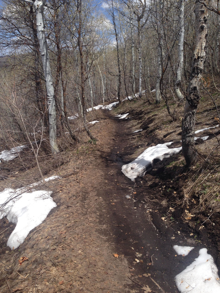 Will the Crest Trail be open this year?-unnamed-3-.jpg