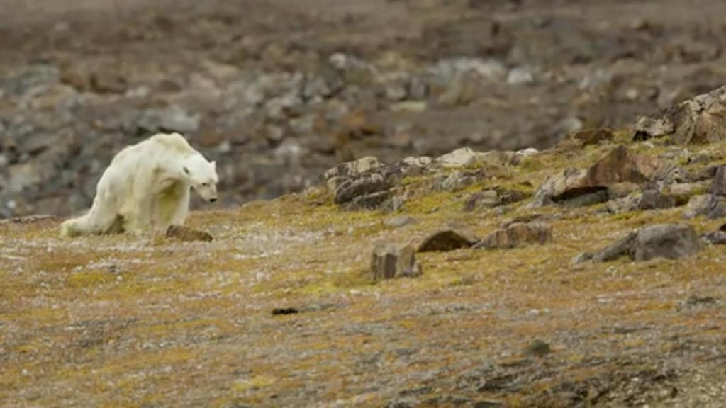 Climate change-untitled.jpg