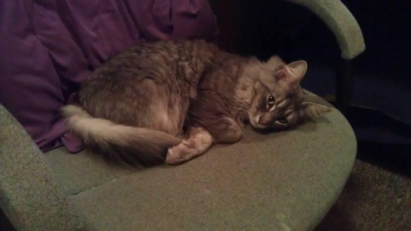 Cat Passion (here kittie, kittie, my new best friend...) Post your cat photos.-uploadfromtaptalk1336967123485.jpg