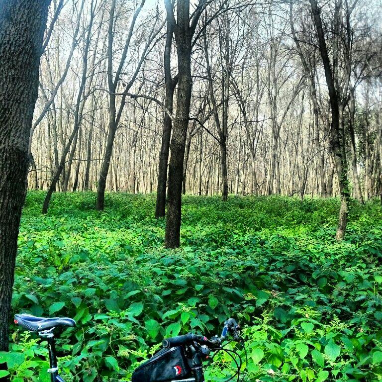 Daily Fat-Bike Pic Thread - 2012-uploadfromtaptalk1348516875231.jpg