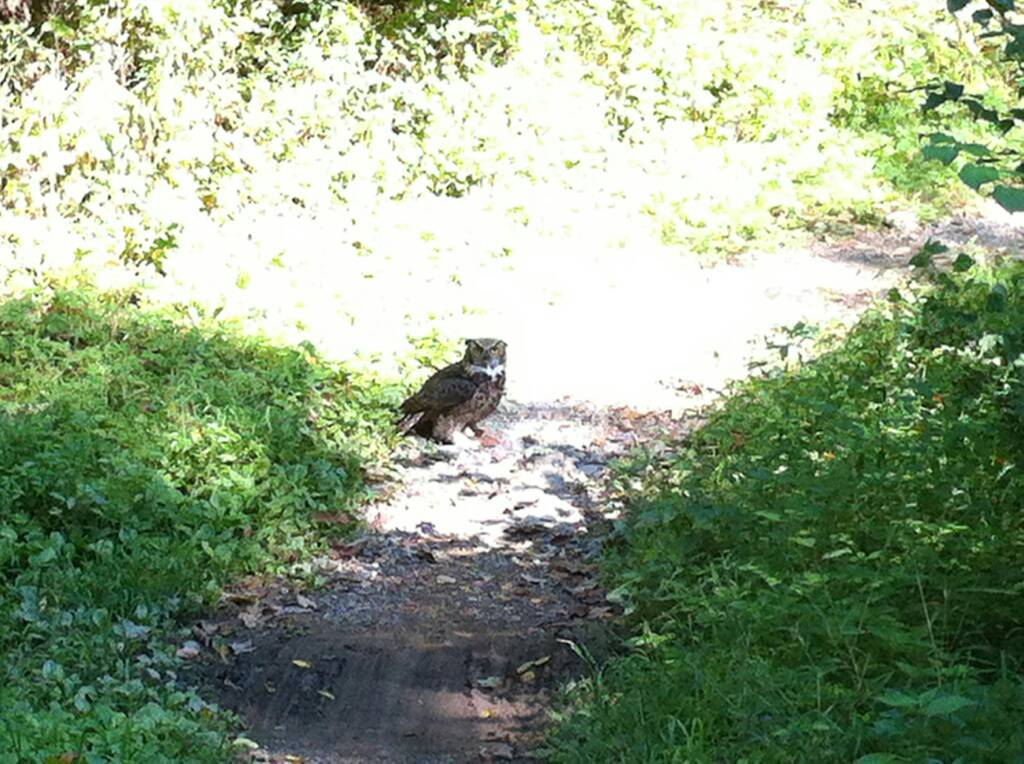 Wildlife you have seen on trail...post your pics...-uploadfromtaptalk1356930558229.jpg