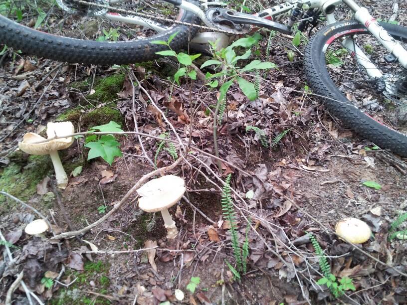 Mushrooms....Post your pics...-uploadfromtaptalk1399263493944.jpg