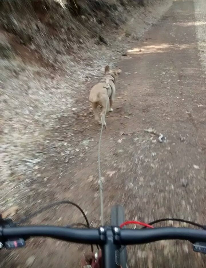 What did You do today on your mountain bike?-uploadfromtaptalk1411867087381.jpg