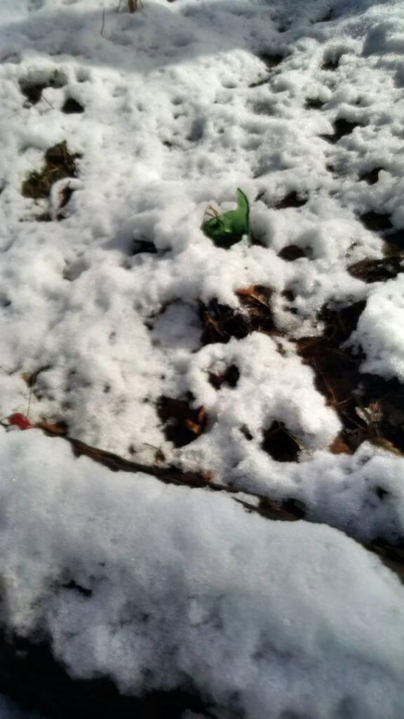 Green Lane trail conditions-uploadfromtaptalk1417105589484.jpg