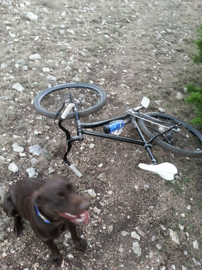Post your dog with your single speed-uploadfromtaptalk1454857241318.jpg