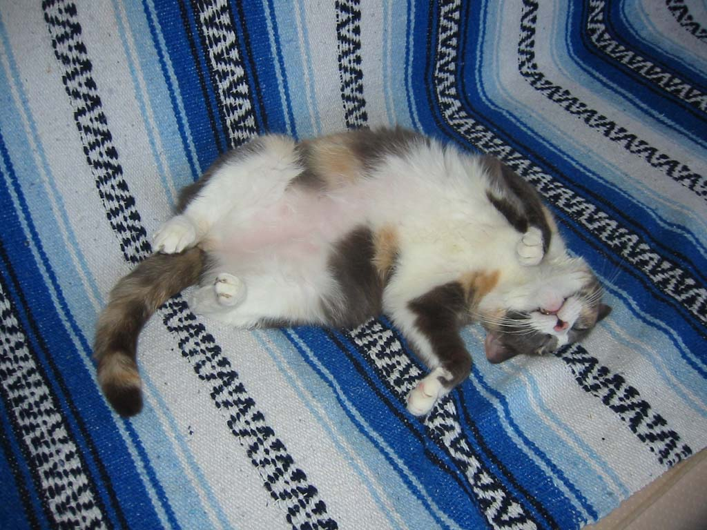 Cat Passion (here kittie, kittie, my new best friend...) Post your cat photos.-upside_down_bug.jpg