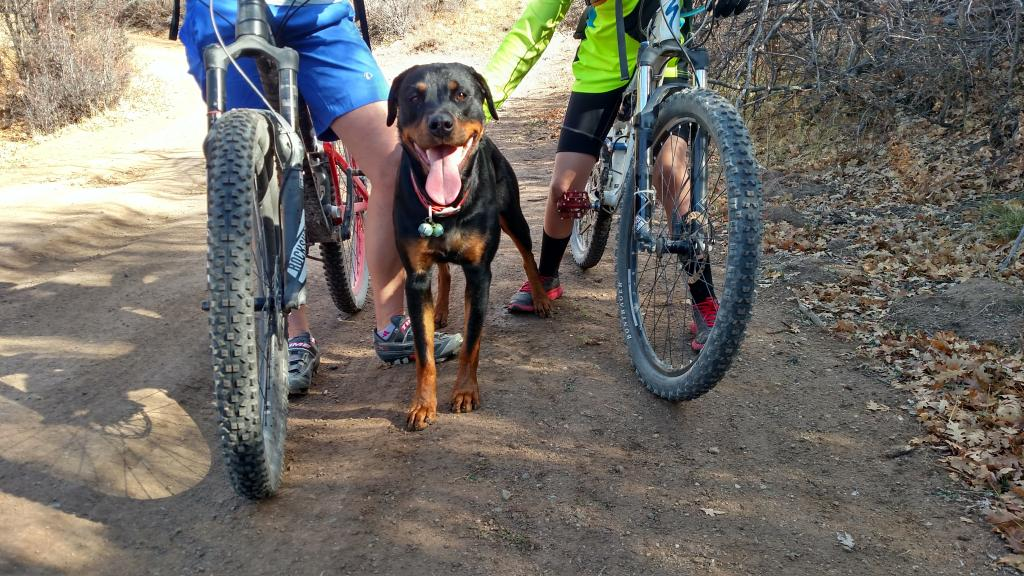 Dogs with Passion-ursa-riding.jpg