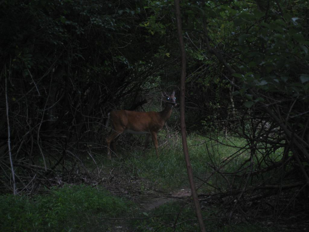 Wildlife you have seen on trail...post your pics...-valley-forge-biking-003.jpg
