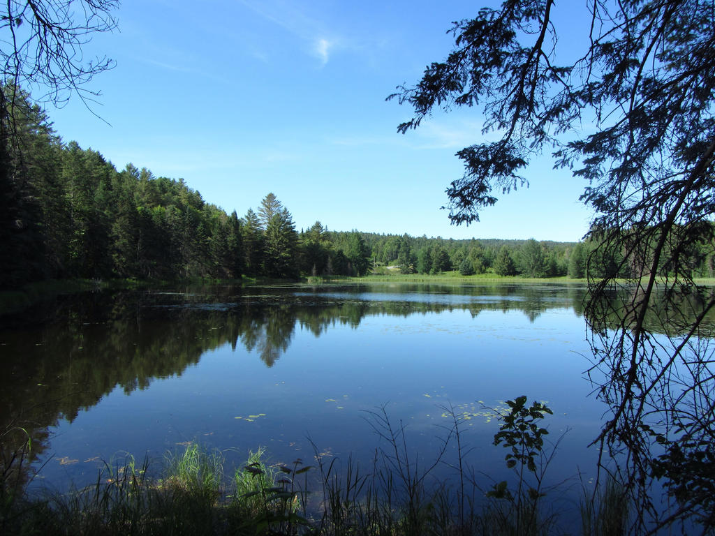 Today's Pic or Story-vermont-pond.jpg
