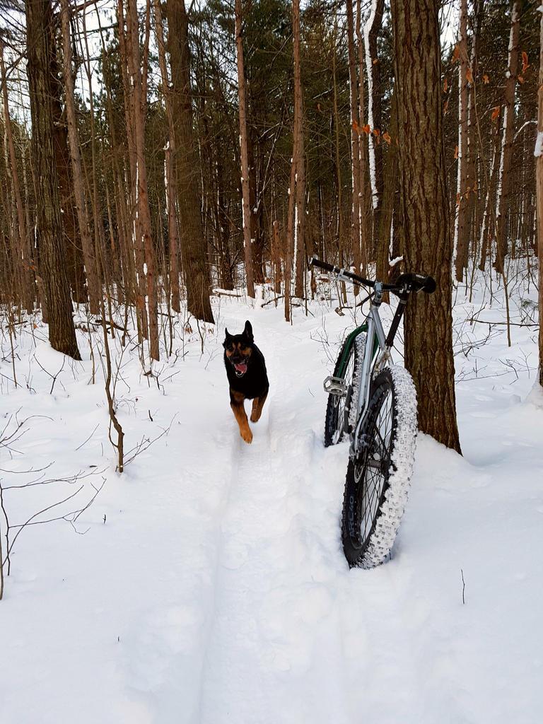 (Winter) Trail Conditions-vquisnc.jpg