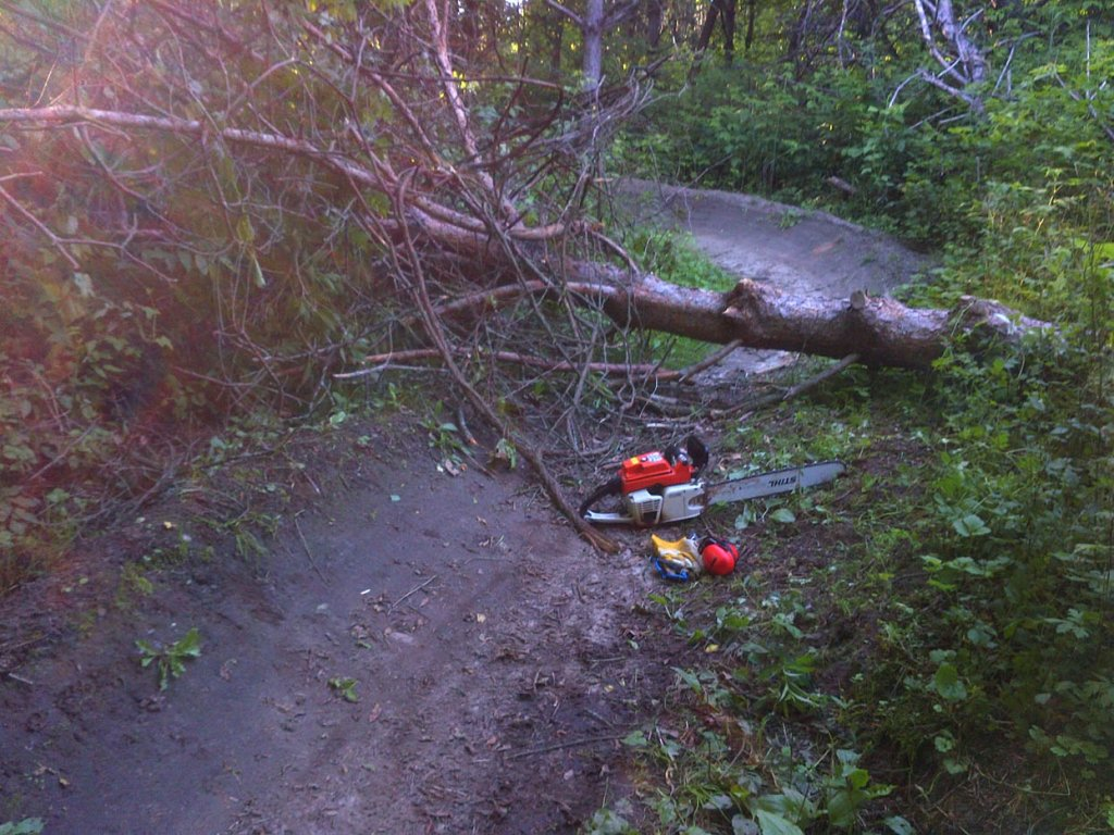 Some small trees down on the WCC Trails-vtha.jpg