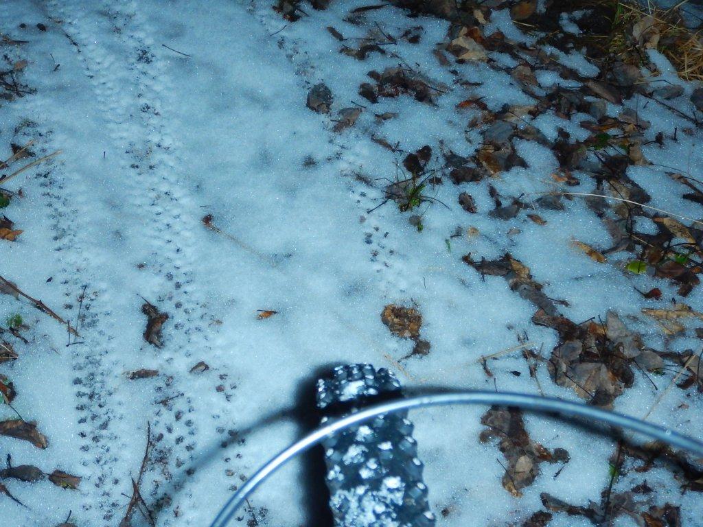 did you ride today?-vtrfjhr.jpg
