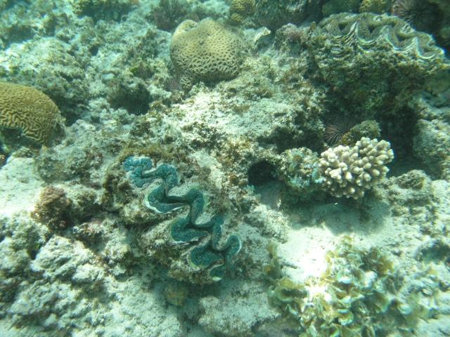 Beach/Sand riding picture thread.-waroora-underwater-rev-1-p1010099.jpg