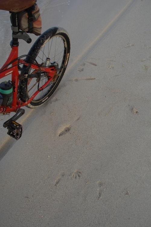 Beach/Sand riding picture thread.-warroora-beach-ride-19-11-2009-rev-1-img02699.jpg