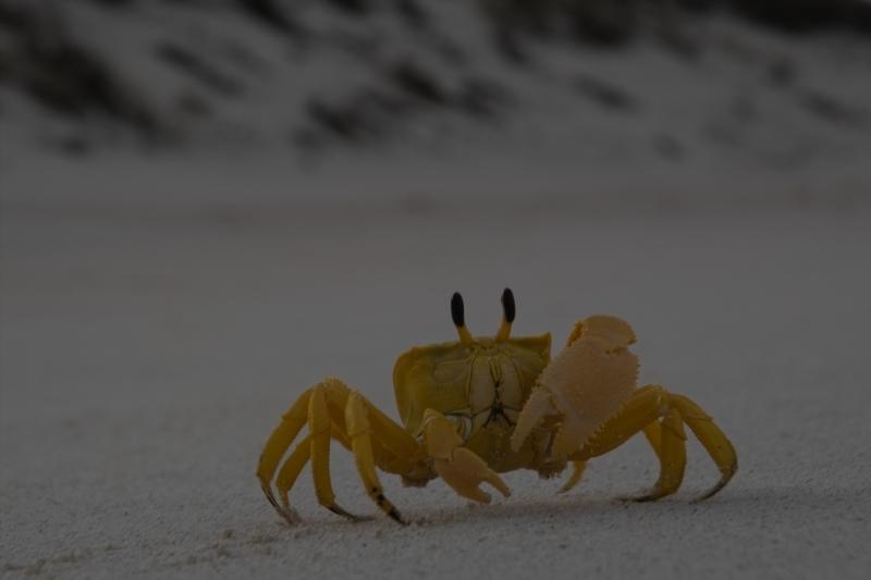 Beach/Sand riding picture thread.-warroora-crab-19-11-2009-img02708.jpg
