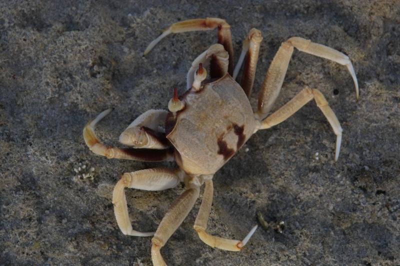 Beach/Sand riding picture thread.-warroora-crab-19-11-2009-img02721.jpg