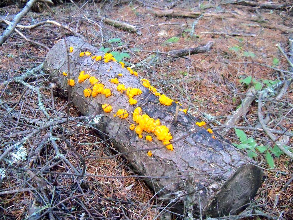 Photo Friday - December 4th-weird-fungus-100_0248.jpg