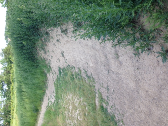 What did You do today on your mountain bike?-westdirt3.jpg