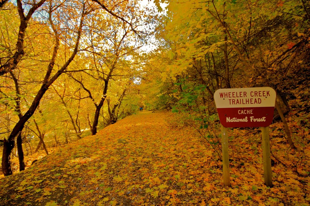 Post Pics of your Fall Foliage!!-wheeler.jpg