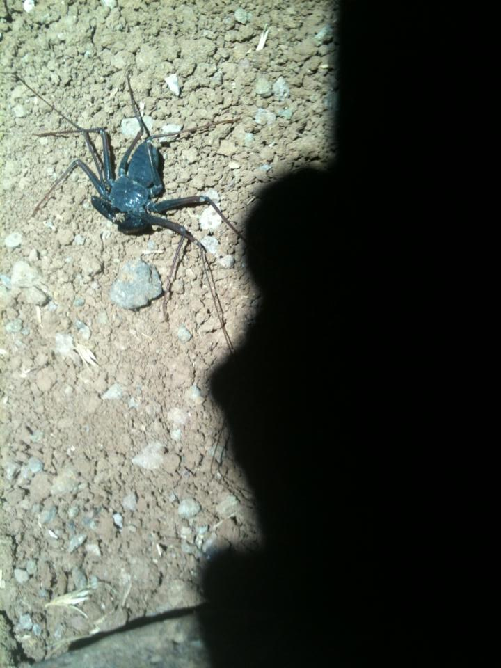 Photo Friday 9/6/13 Grand Junction Epic Ride Edition-whip-scorpion.jpg