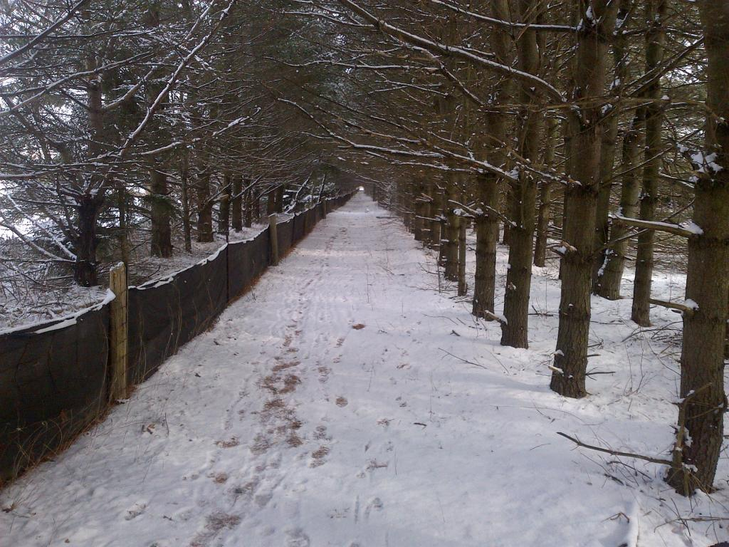 what is your riding plan for winter. any plan!-whitby-20130126-00014.jpg