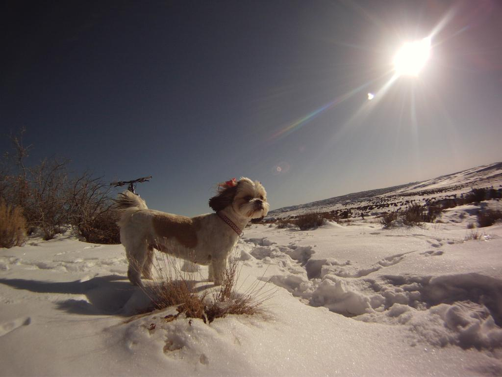 Photo Assignment: Snow-white-mesa-12-27-11-021.jpg