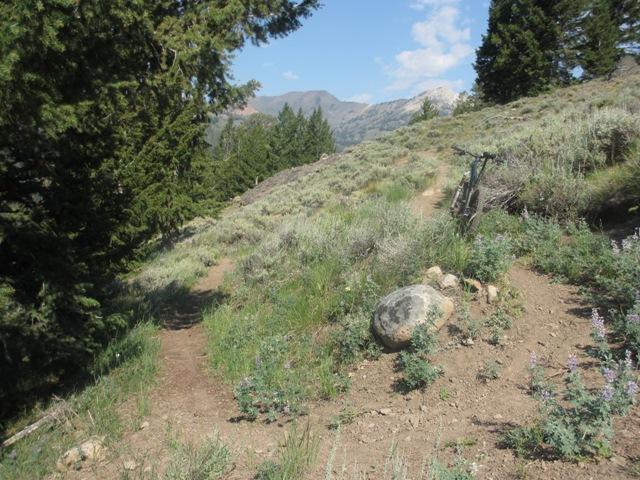 Halstead Fire/Stanley area trail info?-whitecloud1.jpg